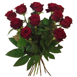 11 Red Roses and Fillers